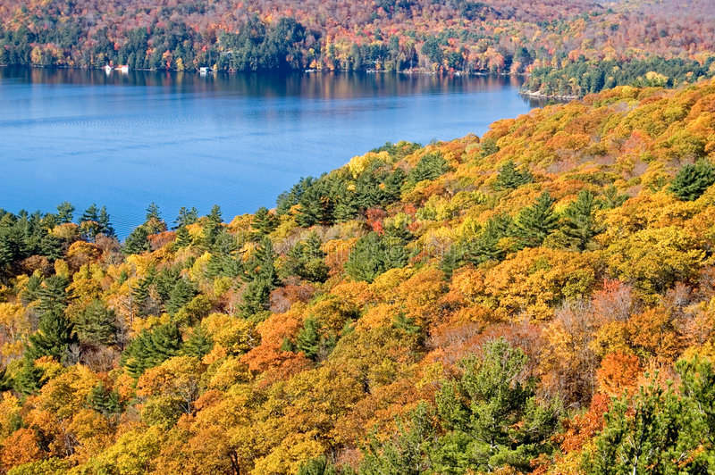 Download Fall Landscape stock image. Image of foliage, maple, pine - 1346877