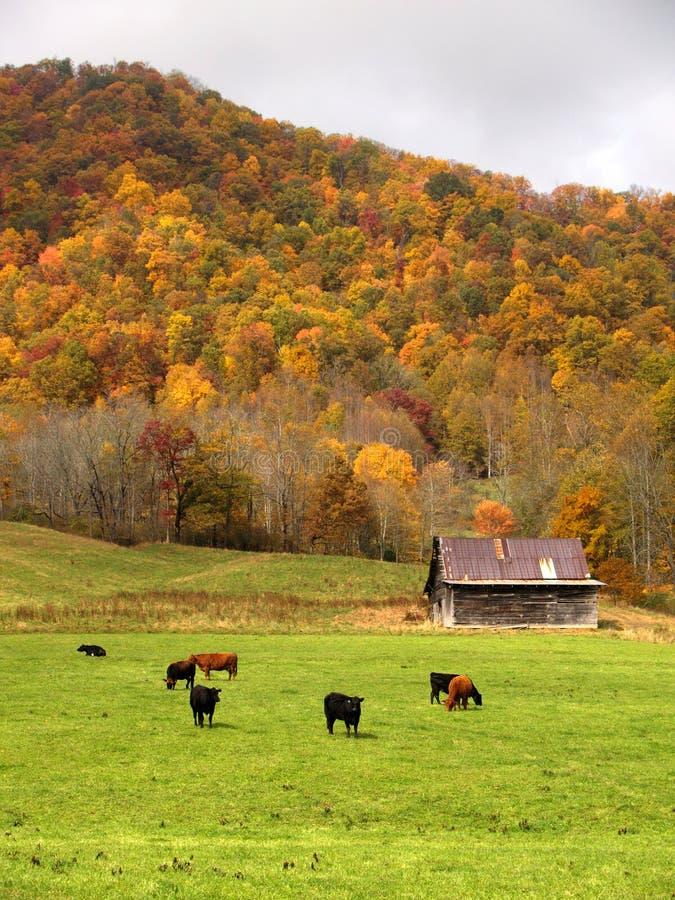 Fall Landscape 3 Stock Photo Image Of Cattle Barnyard