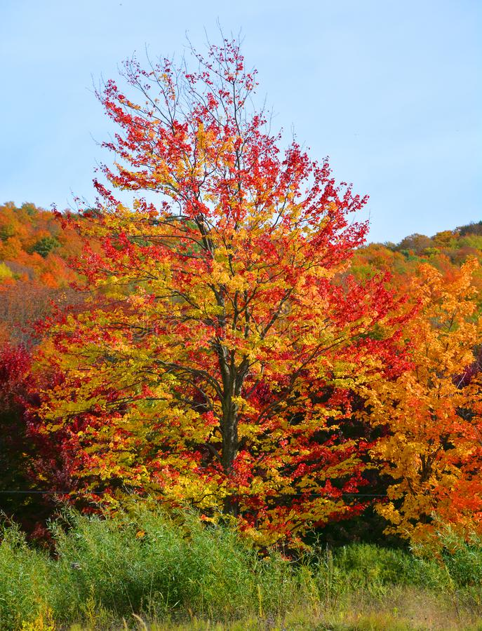 Fall landscape Eastern township region. Quebec province Canada royalty free stock images