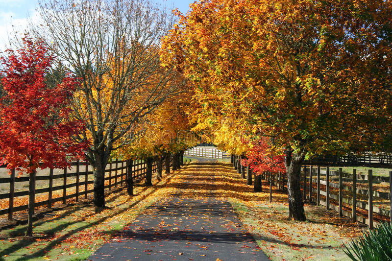 Fall Lane. A favorite time of the year is fall. This wonderful country lane can attest to the beauty of fall royalty free stock photo