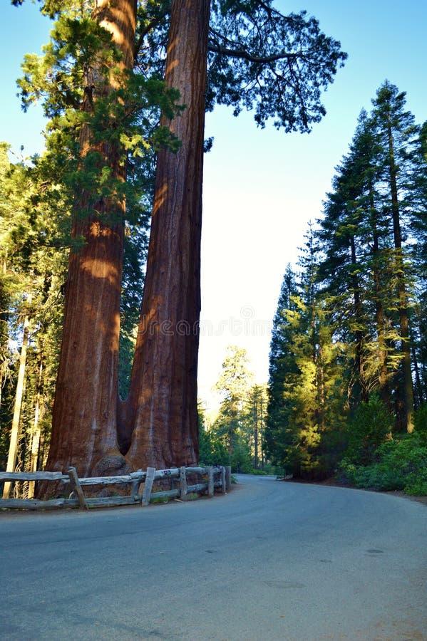 Fall-Laub in Yosemite lizenzfreies stockfoto