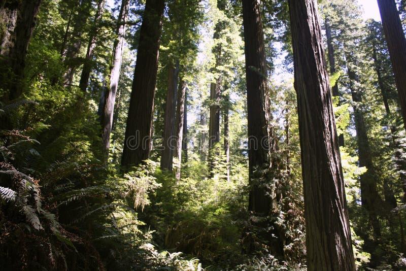 Fall-Laub in Yosemite lizenzfreies stockbild