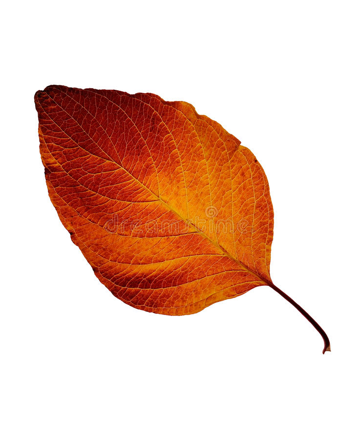 Free Fall Leaf Stock Images - 16779554