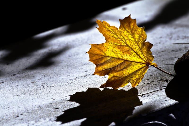 Download Fall leaf stock image. Image of foliage, design, ecology - 17078977
