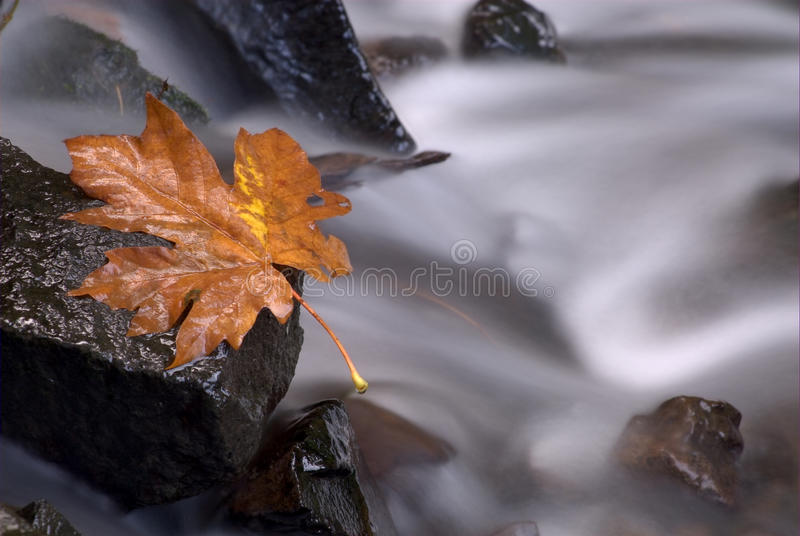 Download Fall leaf stock image. Image of fall, rolling, river - 17081253