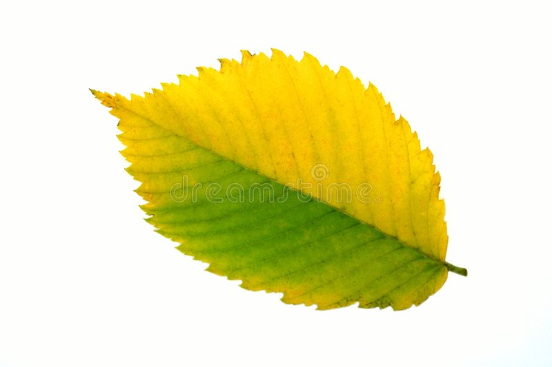 Fall leaf royalty free stock images