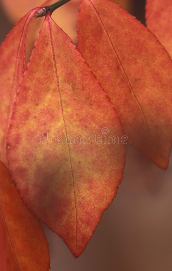 Free Fall Leaf Stock Image - 47281