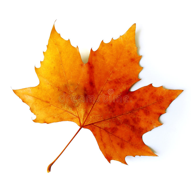 Free Fall Leaf Royalty Free Stock Photo - 6563335