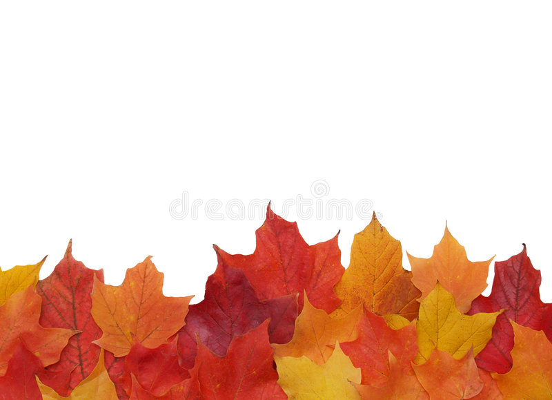 Fall leaf border. Bottom border of colorful fall leaves