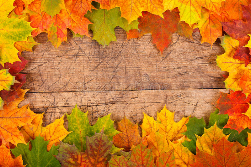Fall leaf border. Fall maple leaf border on rustic wooden background royalty free stock image