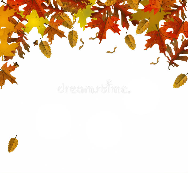 Fall leaf colors. Illustration of fall leaves different colors of autum royalty free illustration