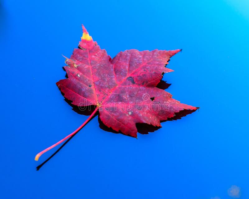 A fall leaf floating in a mountain stream stock photos