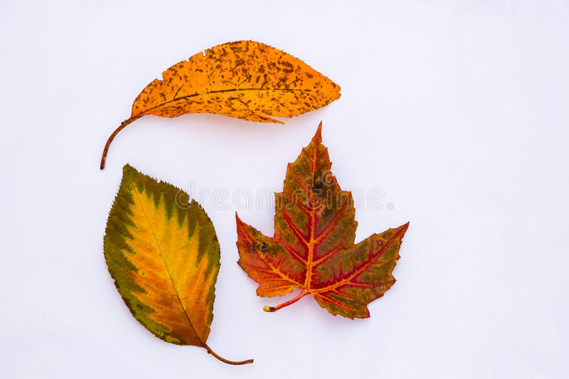 Fall Leaf Patterns stock photos