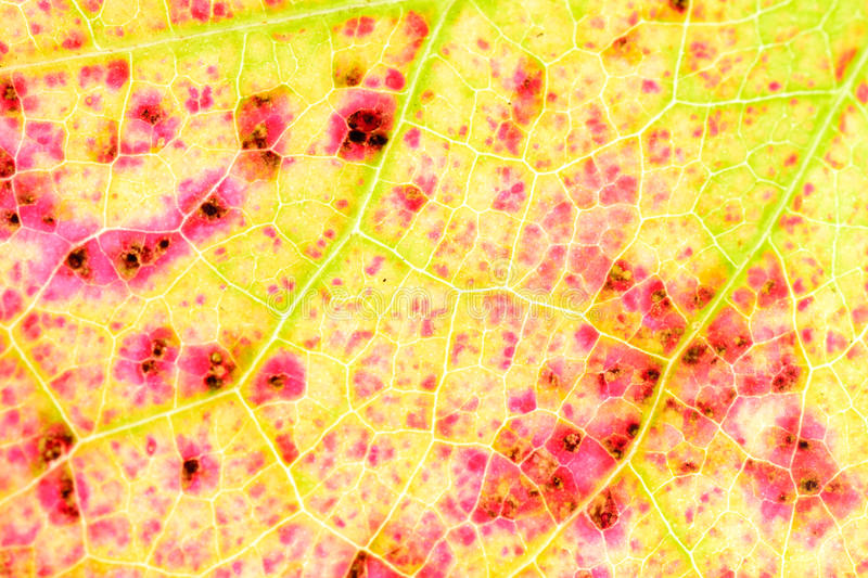 Fall leaf texture detail stock image