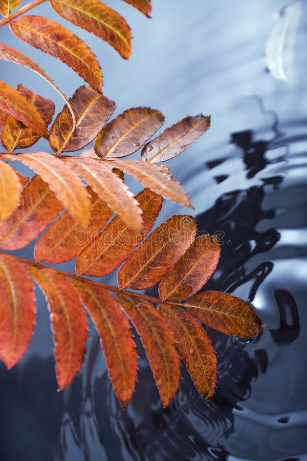 Fall leaf and water royalty free stock photo