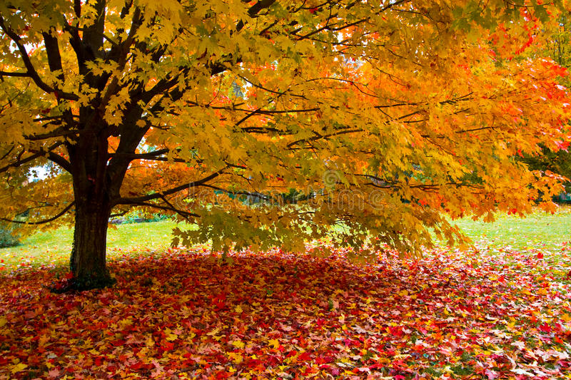 Download Fall leaves stock image. Image of element, grow, change - 19239093