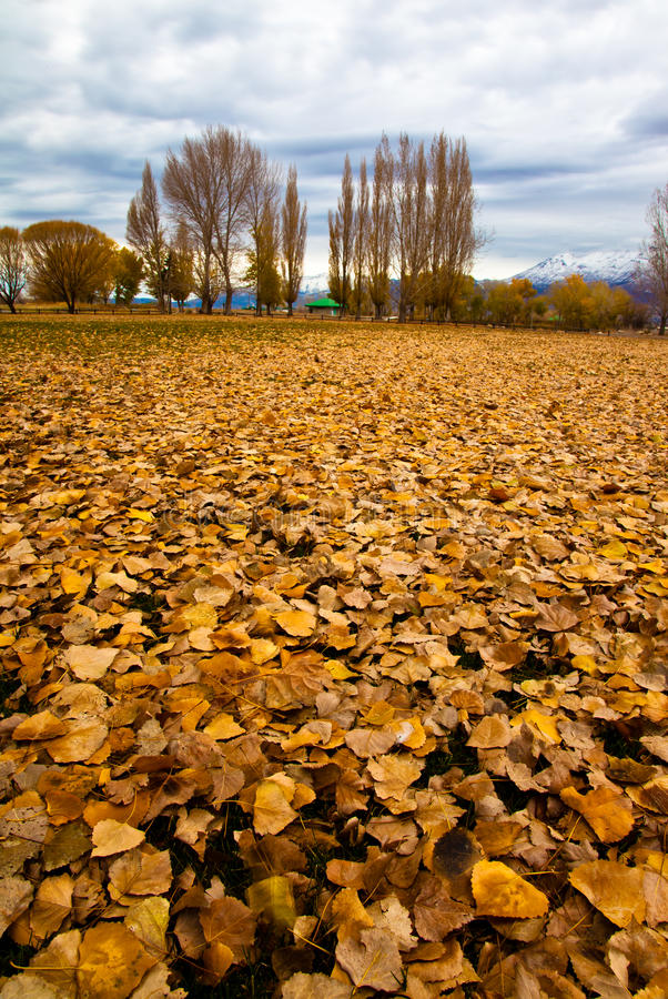 Download Fall Leaves stock image. Image of trees, autumn, clouds - 21804413