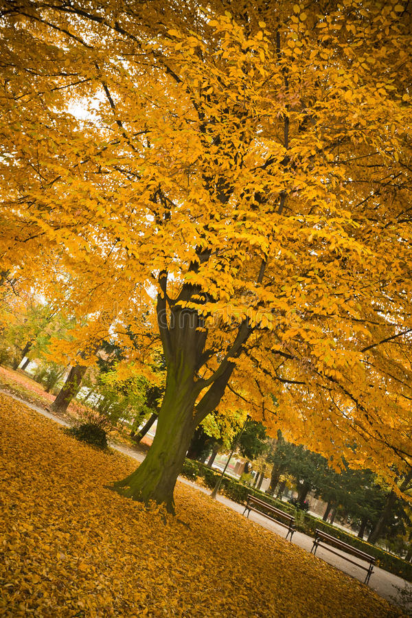 Download Fall leaves stock photo. Image of outside, pattern, november - 21894154