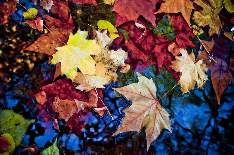 Fall leaves. On the water surface royalty free stock images
