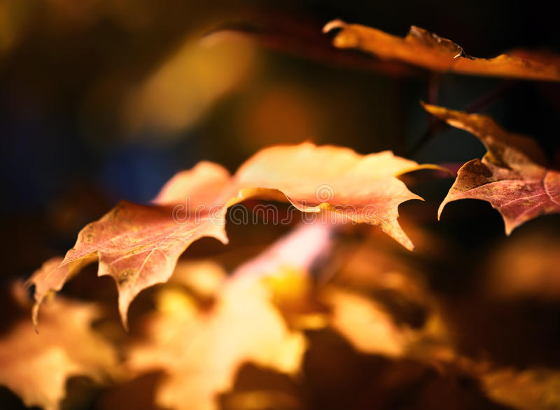Fall Leaves. A photo of fall leaves stock photography