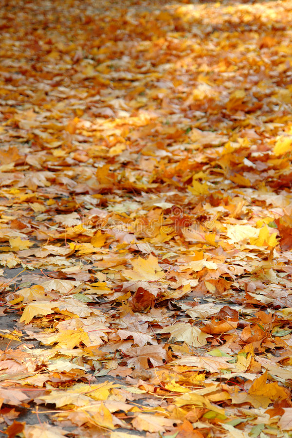 Free Fall Leaves Stock Images - 3693264