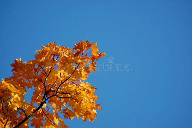 Download Fall leaves stock photo. Image of heaven, park, golden - 6674378