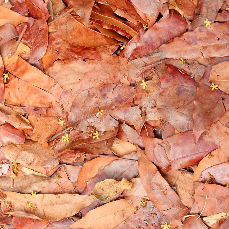 Fall Leaves. Or Autumn background stock image