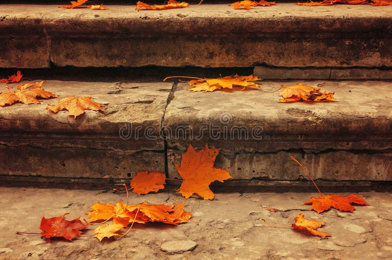 Fall leaves background. Fallen maple leaves on the old textured stone staircase - fall urban October landscape stock photos