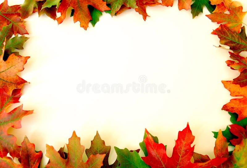 Fall Leaves Border on White stock image