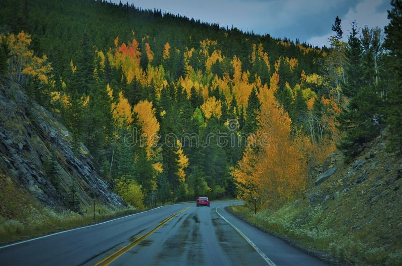 Fall Leaves in COLORADO Mountain royalty free stock photo