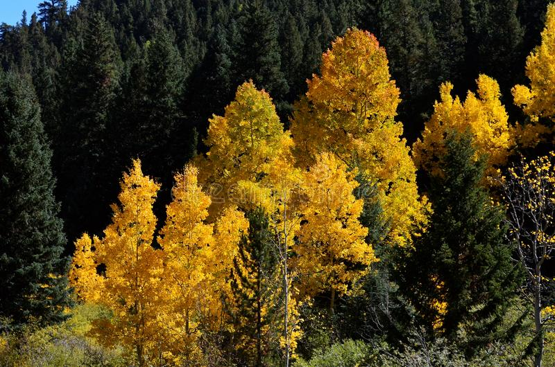 Fall Leaves in COLORADO Mountain stock photo