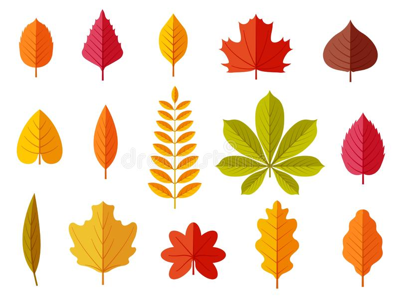 Fall leaves. Colorful autumn leaves, leaf chestnut elm oak, maple forest with yellow and orange foliage. Flat vector. Isolated set leaf and foliage, botany vector illustration