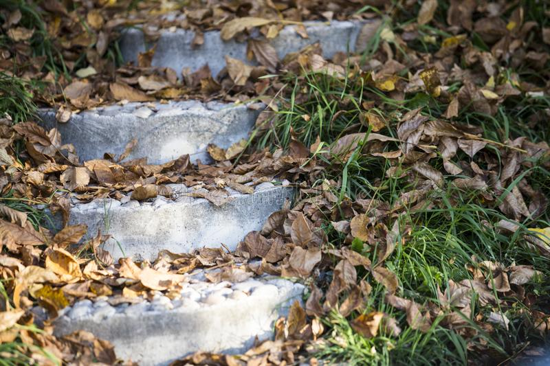 Fall leaves on steps. Fall leaves on concrete steps with green grasses on sunny day royalty free stock image