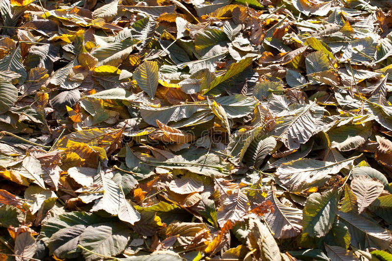Fall leaves cover. On the ground abstract background royalty free stock photography