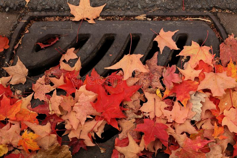 Fall leaves covering city street drain. Colourful fall leaves cover a city street drain in October  creating blockage stock images