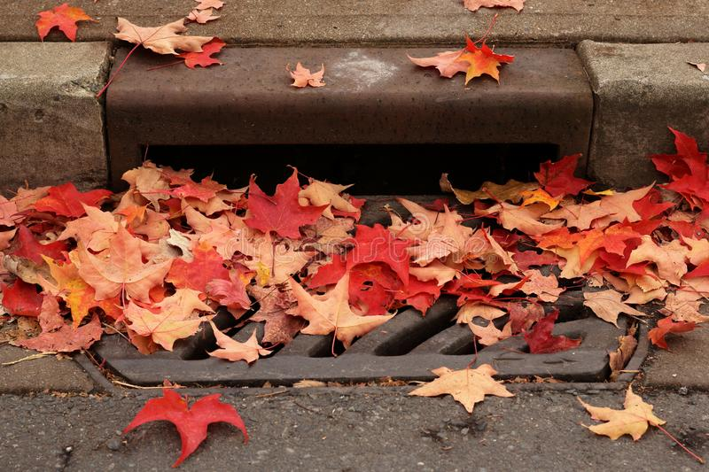 Fall leaves covering city street drain. Colourful fall leaves cover a city street drain in October creating blockage royalty free stock photo