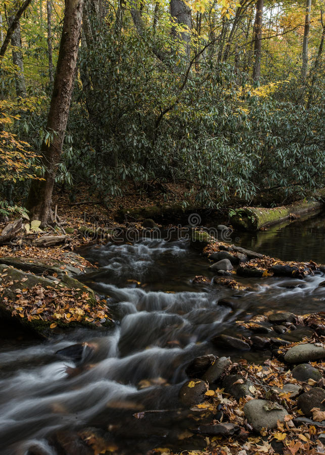 Fall Leaves in Creek. Using a long exposure royalty free stock photography
