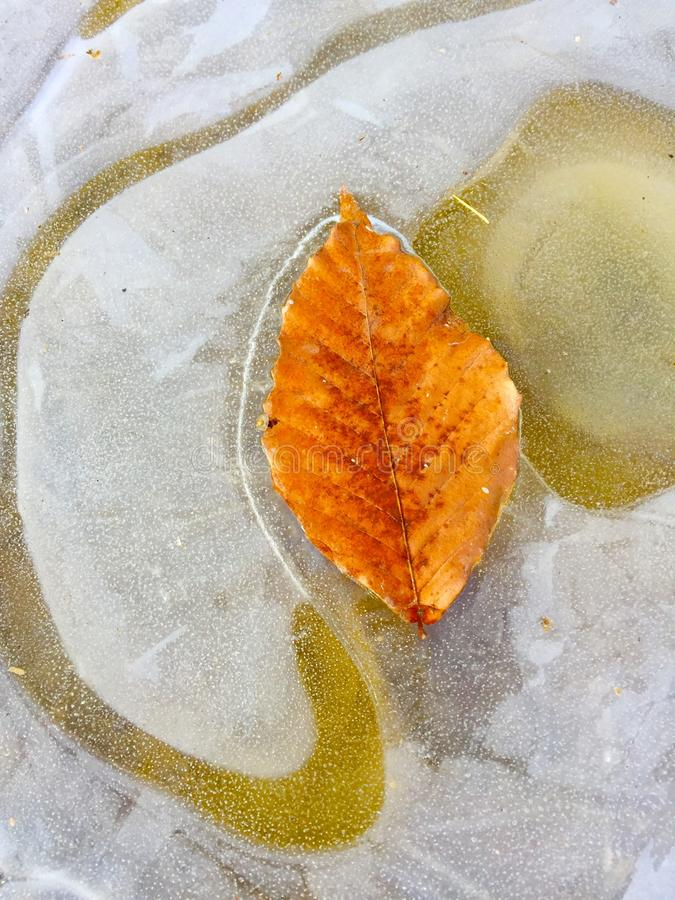 Fall leaves encased in ice stock photos