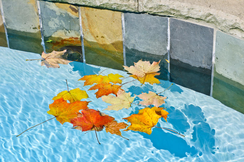Download Fall Leaves Floating In Pool Stock Image - Image: 27689775