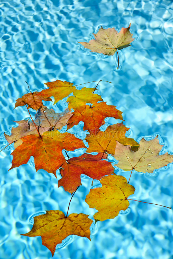 Fall leaves floating in pool stock image