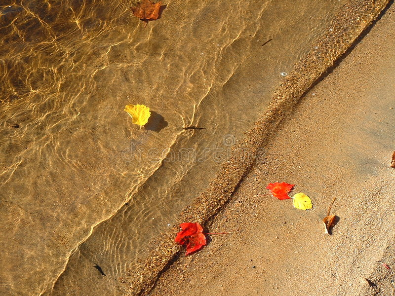 Fall leaves floating in the water. At the edge of the beach with a wave stock photo