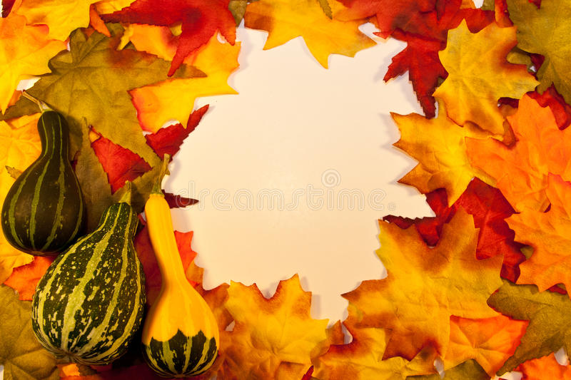 Fall Leaves with Gourds royalty free stock images
