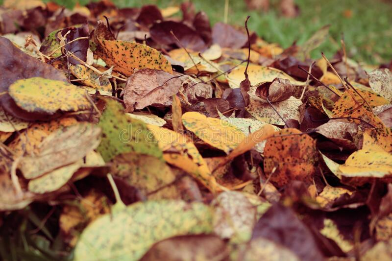 Fall leaves on grass stock images