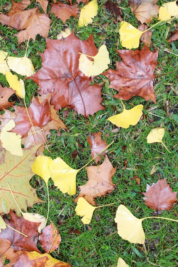 Fall Leaves on Green Grass stock images