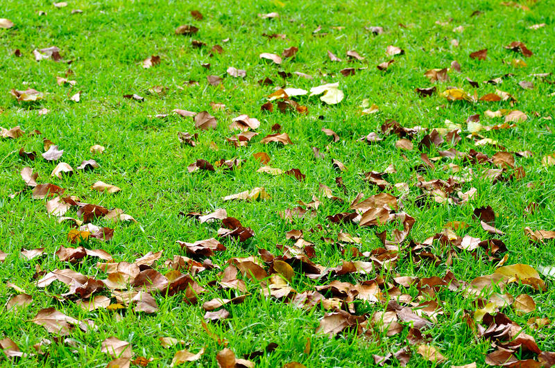 Fall leaves. On green lawn royalty free stock photography