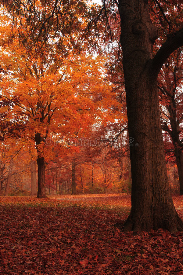 Download Fall Leaves On The Ground Royalty Free Stock Image - Image: 7546196