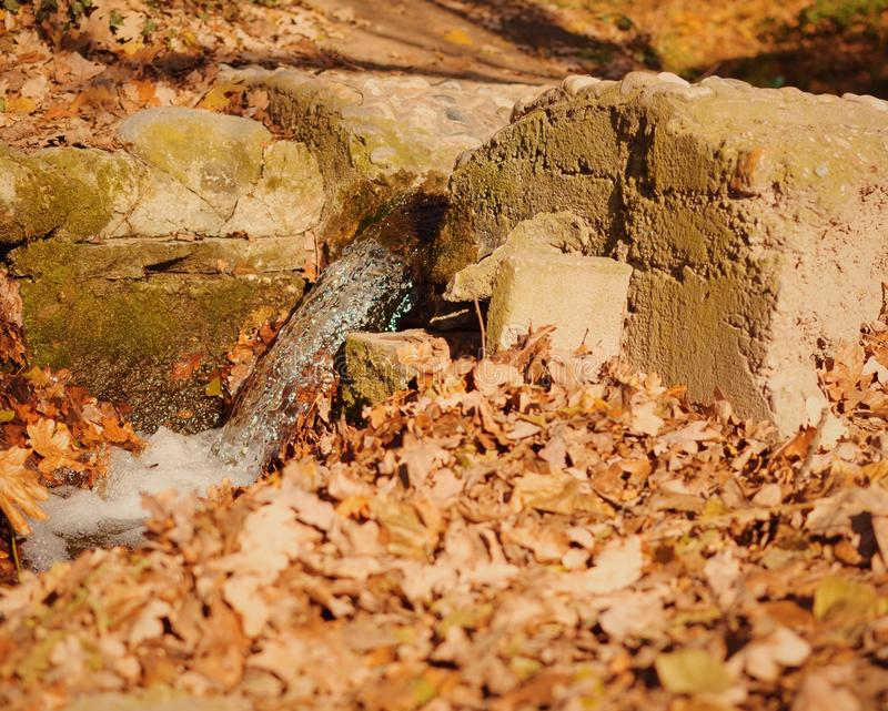 Fall leaves on ground. Fall leaves covering ground with dried branch and rocks on sunny day royalty free stock image