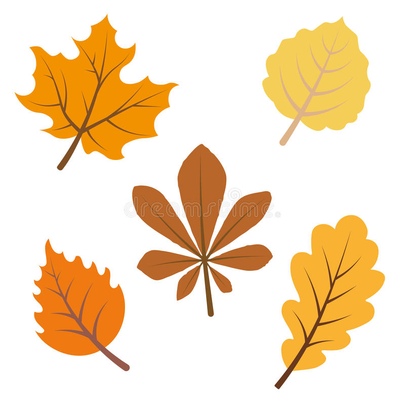 Fall leaves isolated. Autumnal fall leaves sketch collection vector illustration