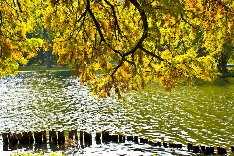 Fall leaves over water stock photography