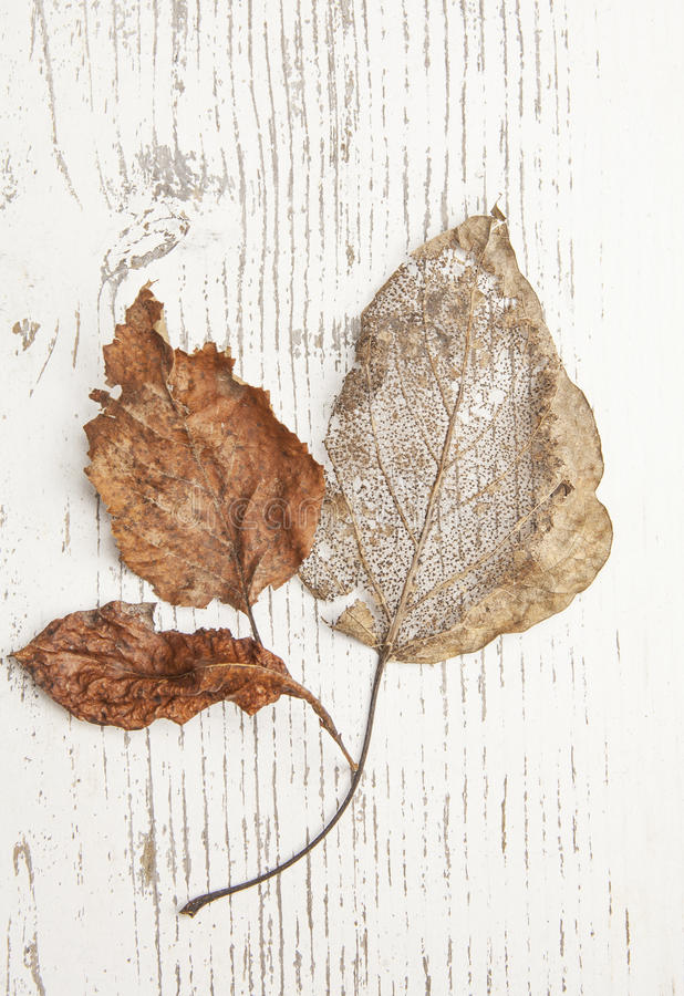 Fall leaves on painted wood stock image